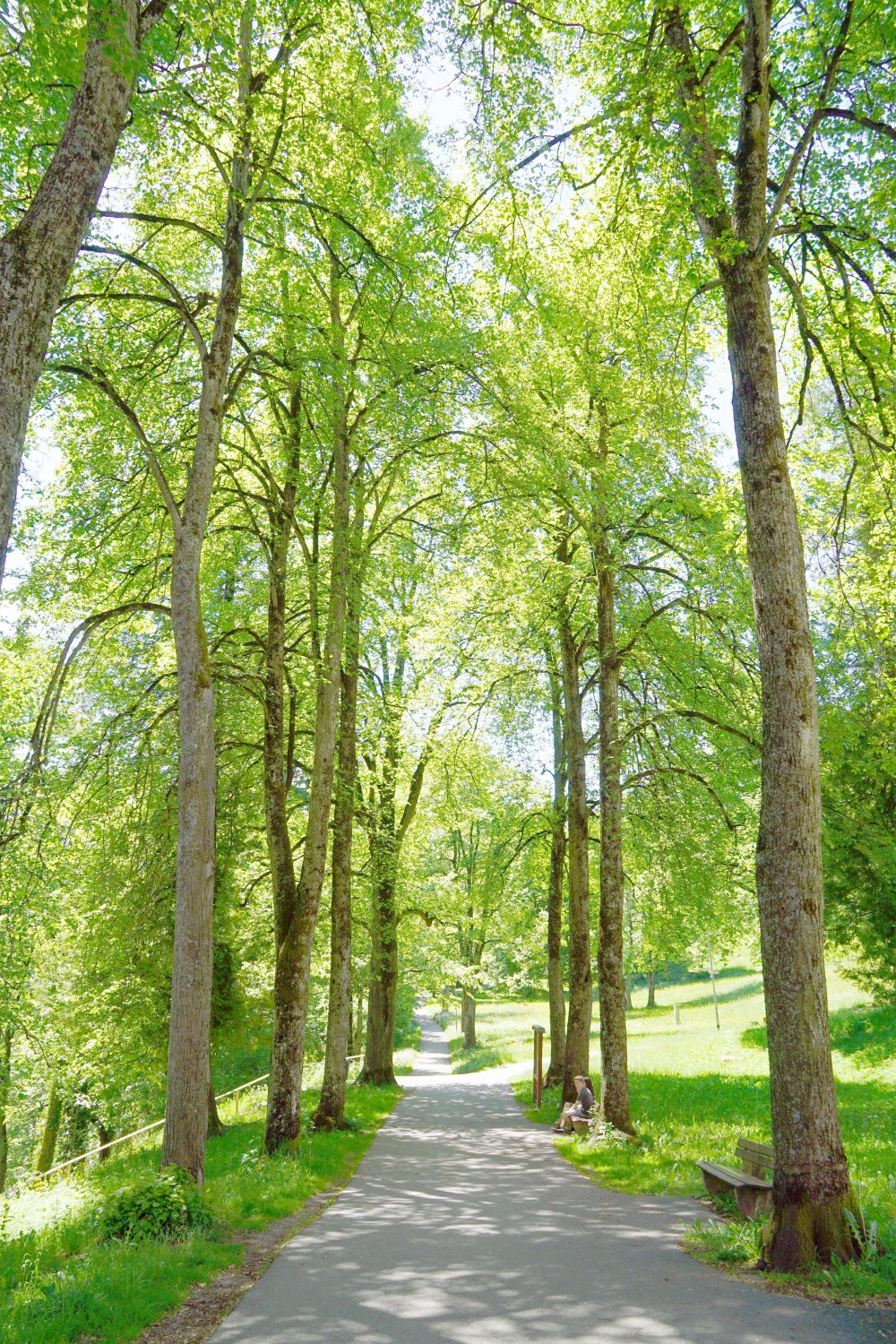Green pathway filled with trees